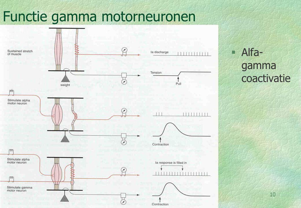 18-09-0011 Flexion withdrawal & crossed extensor §Coordinatie tussen twee benen §verloopt via drie interneuronen