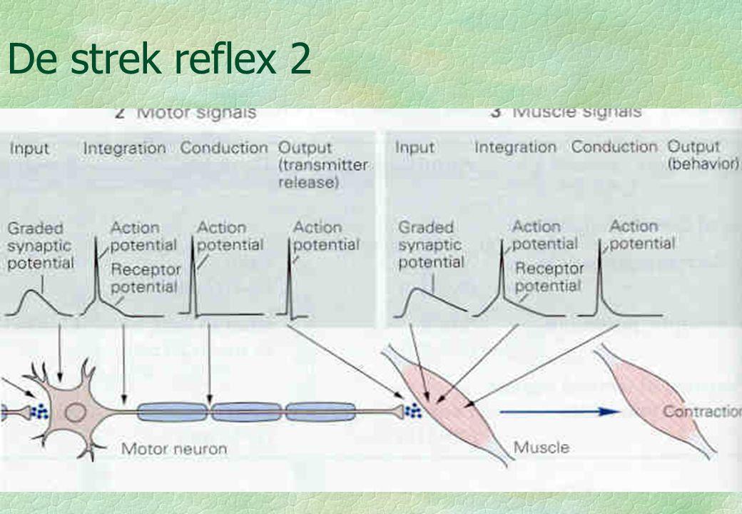 18-09-006 De strek reflex 3