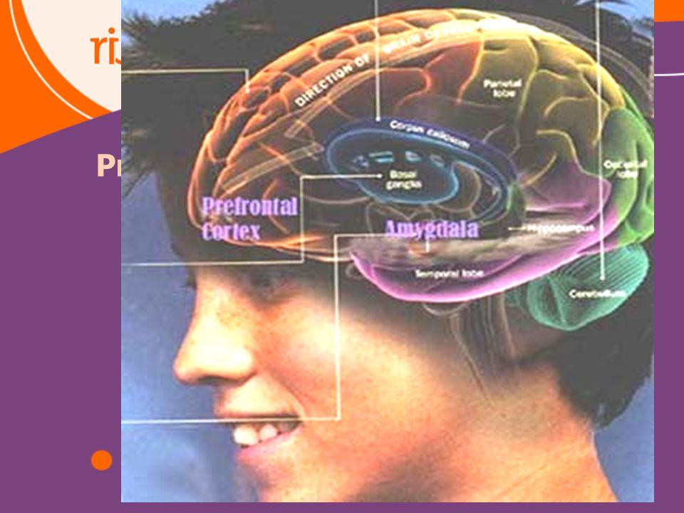 23 Prefrontale cortex
