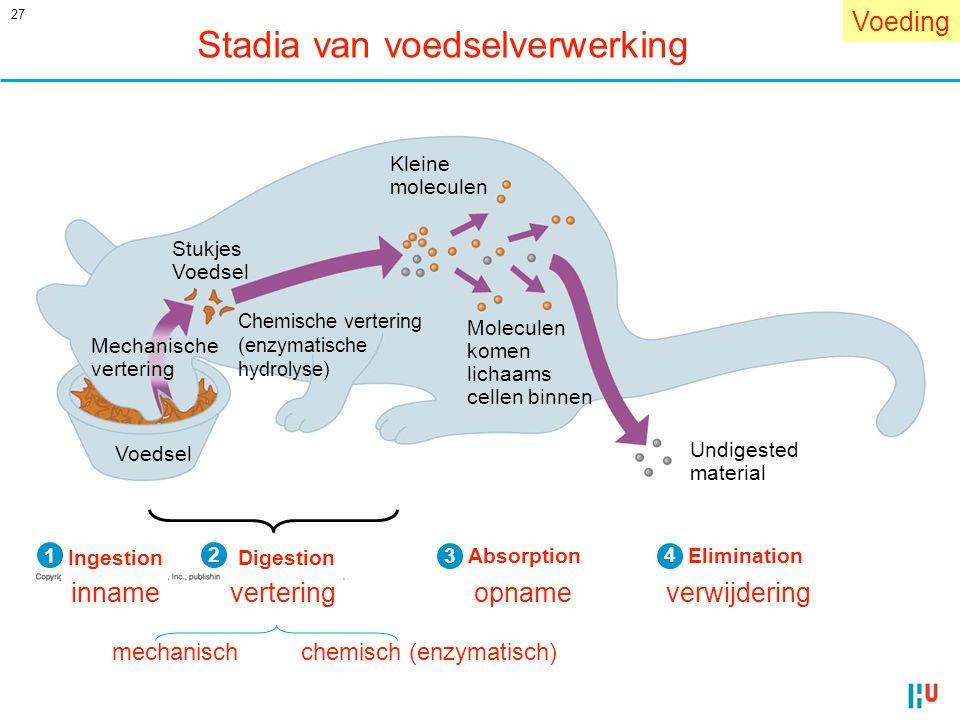 27 Stadia van voedselverwerking Voeding IngestionDigestion AbsorptionElimination Undigested material Chemische vertering (enzymatische hydrolyse) Mole