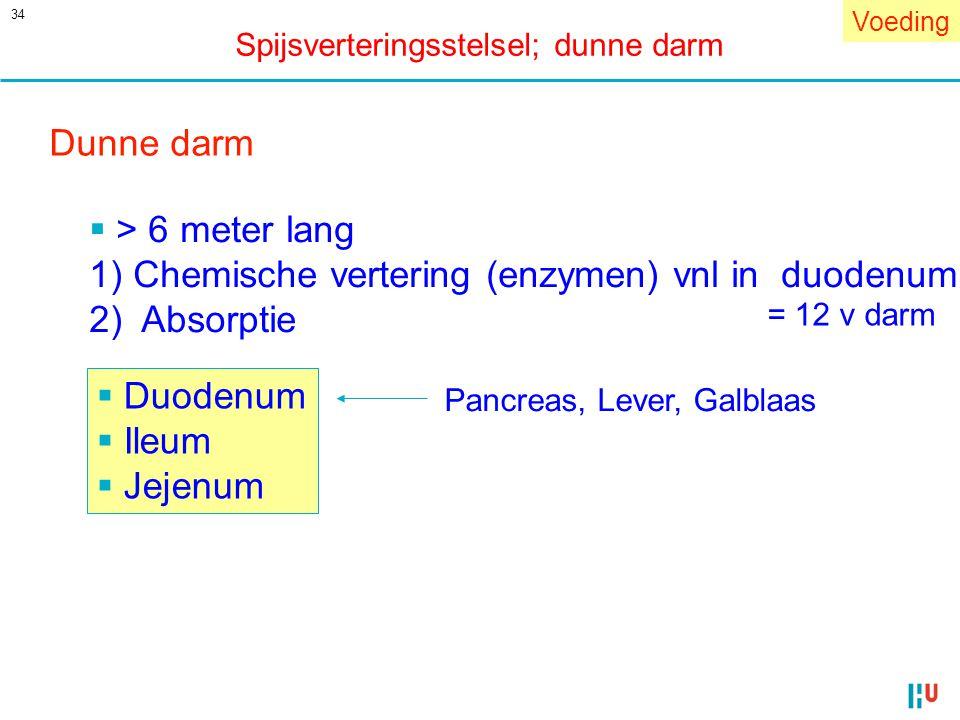 34 Dunne darm  Duodenum  Ileum  Jejenum  > 6 meter lang 1) Chemische vertering (enzymen) vnl in duodenum 2) Absorptie Pancreas, Lever, Galblaas Vo