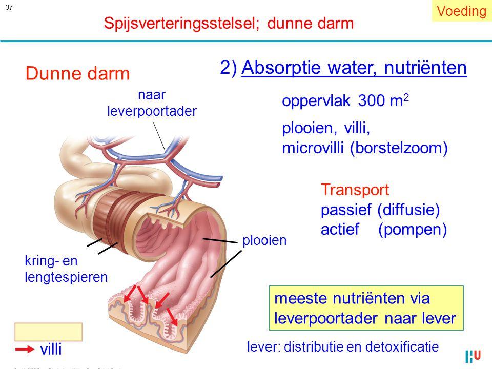 37 villi kring- en lengtespieren plooien naar leverpoortader Dunne darm 2) Absorptie water, nutriënten oppervlak 300 m 2 plooien, villi, microvilli (b