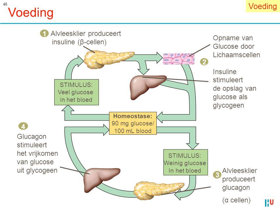 46 Voeding STIMULUS: Veel glucose in het bloed Homeostase: 90 mg glucose/ 100 mL blood STIMULUS: Weinig glucose In het bloed Alvleesklier produceert i