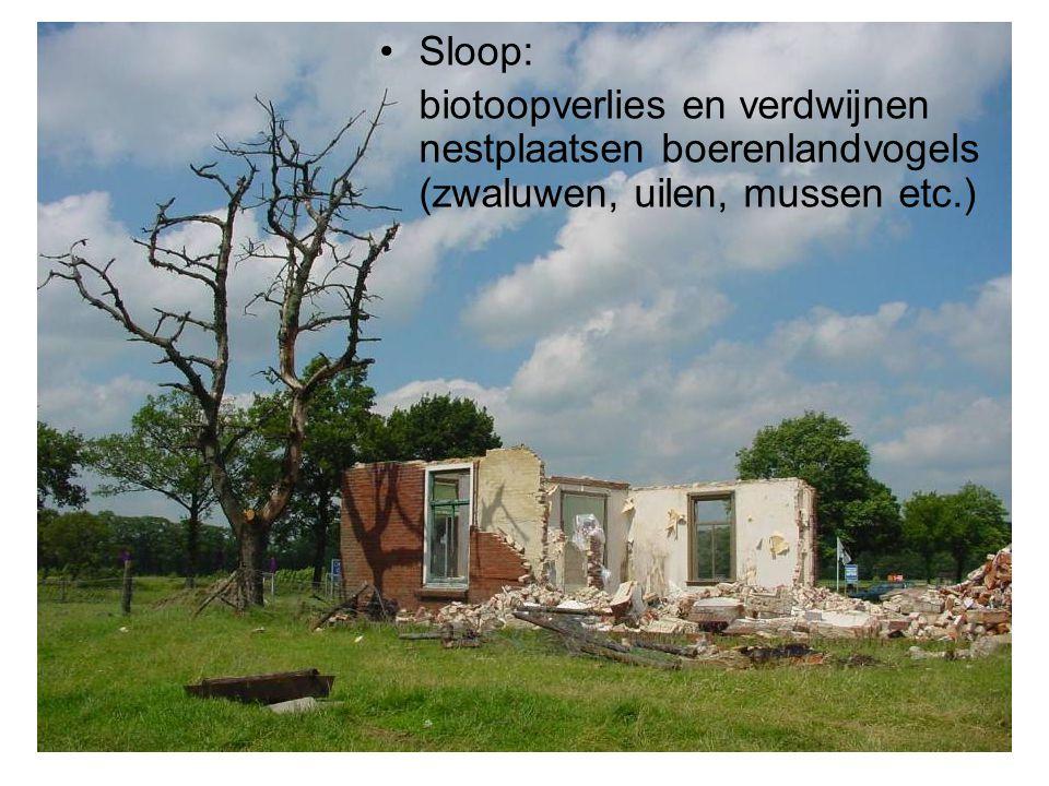 Sloop: biotoopverlies en verdwijnen nestplaatsen boerenlandvogels (zwaluwen, uilen, mussen etc.)
