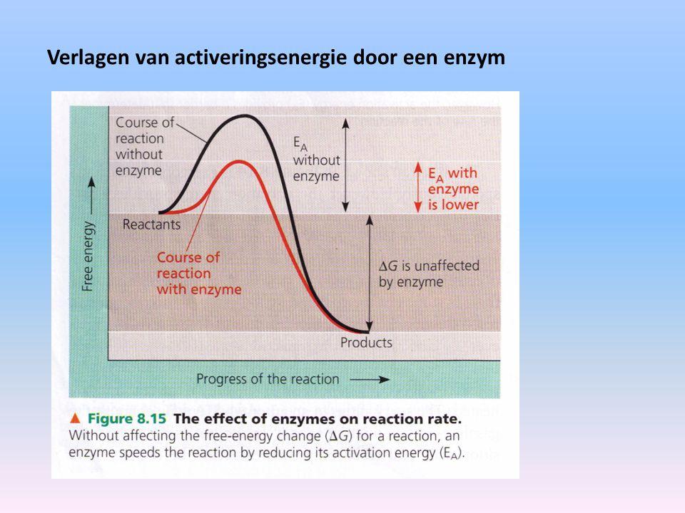 Enzym met actieve plaats Enzym met actieve plaats bezet door een substraat