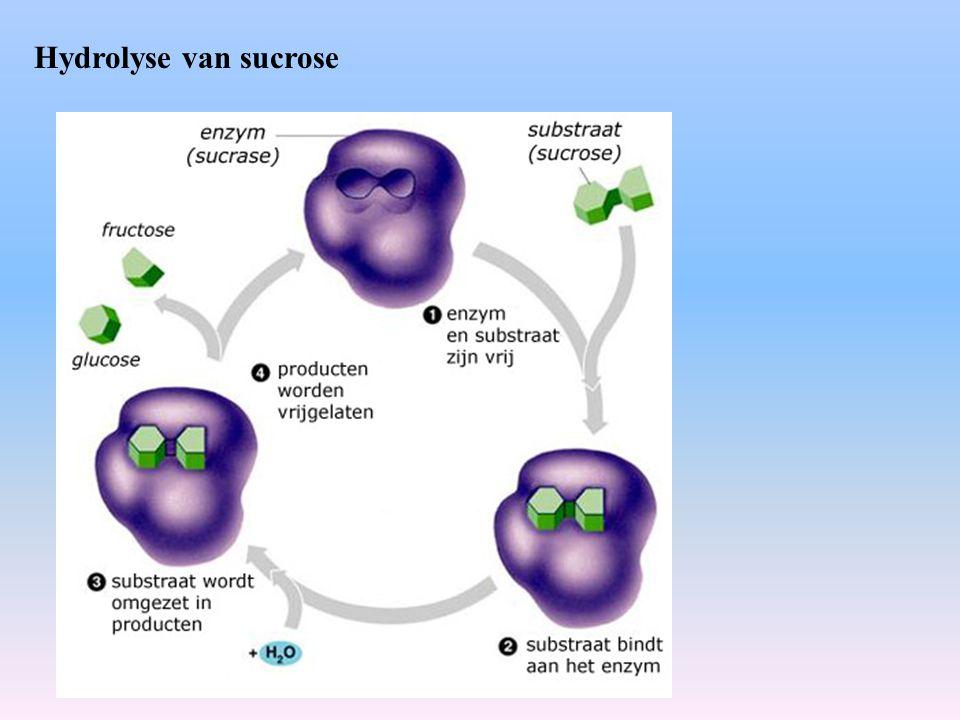 Enzymen II Werking van enzymen wordt beïnvloed door de temperatuur en pH  optimale condities (mens t=35-40 ºC; pH=6-8) meest actieve conformatie van het enzym.