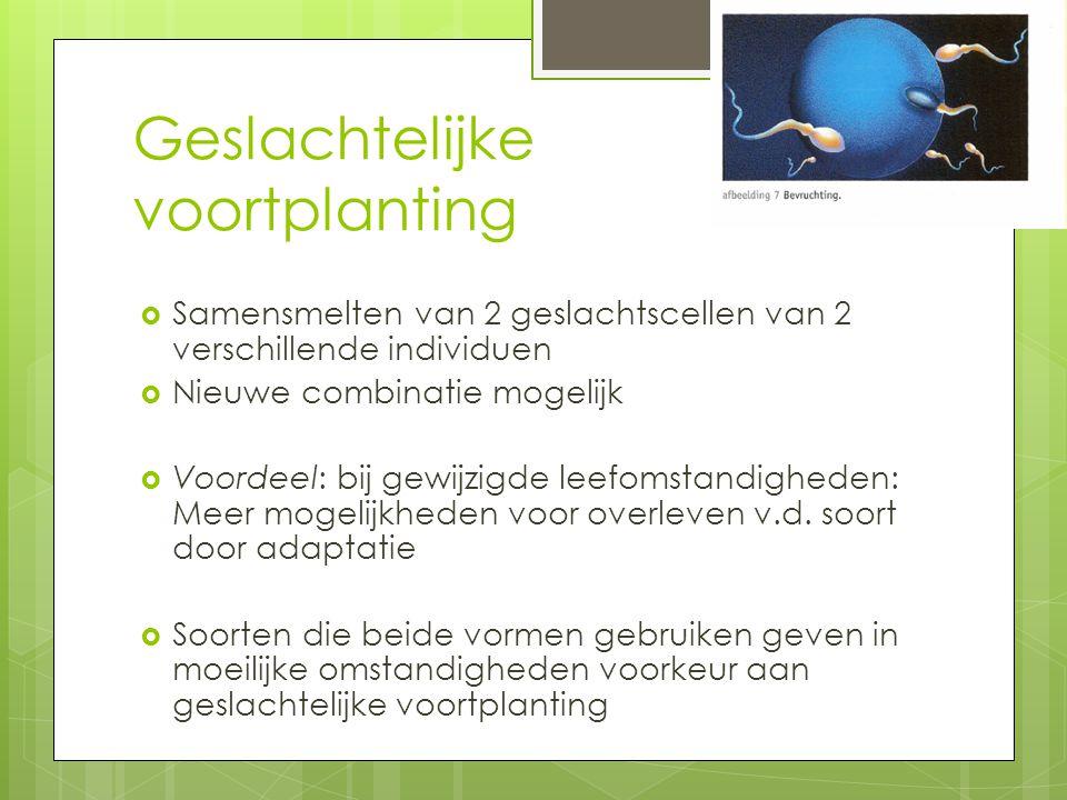 Ongeslachtelijk Geslachtelijk  http://www.schoolt v.nl/beeldbank/cli p/20030611_pantof feldiertje02 http://www.schoolt v.nl/beeldbank/cli p/20030611_pantof feldiertje02  http://www.schoolt v.nl/beeldbank/cli p/20030611_pantof feldiertje03 http://www.schoolt v.nl/beeldbank/cli p/20030611_pantof feldiertje03