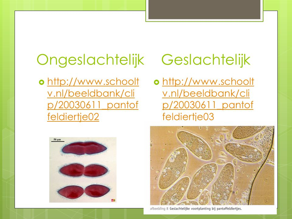 Ongeslachtelijk Geslachtelijk  http://www.schoolt v.nl/beeldbank/cli p/20030611_pantof feldiertje02 http://www.schoolt v.nl/beeldbank/cli p/20030611_