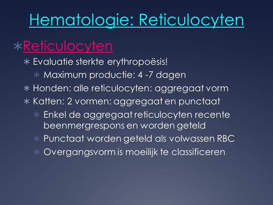 Hematologie: Reticulocyten  Reticulocyten  Evaluatie sterkte erythropoësis!  Maximum productie: 4 -7 dagen  Honden: alle reticulocyten: aggregaat