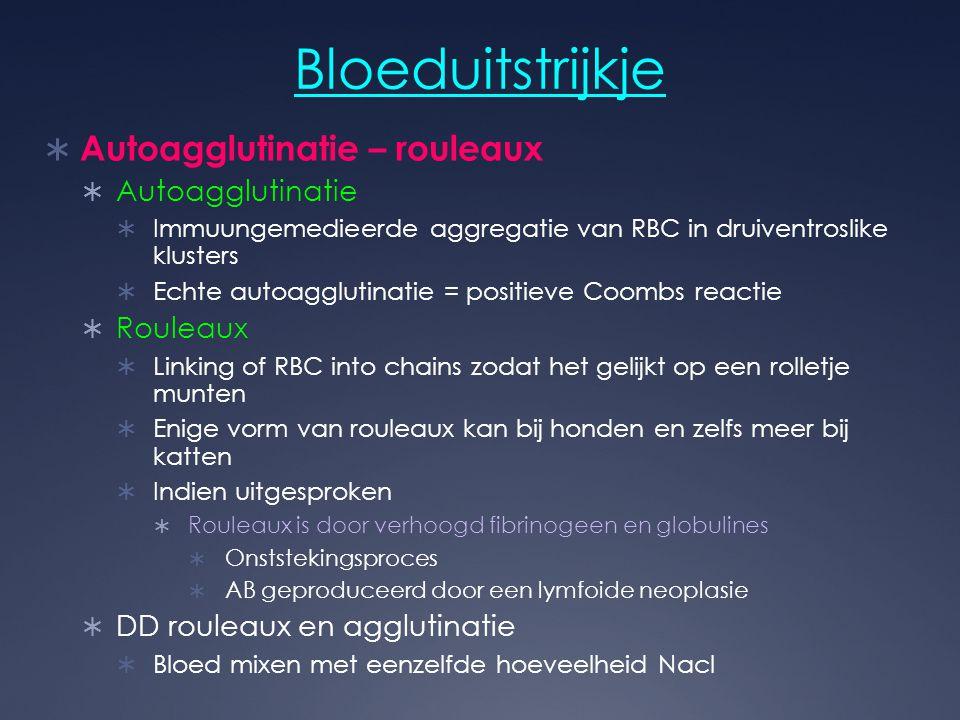 Bloeduitstrijkje  Autoagglutinatie – rouleaux  Autoagglutinatie  Immuungemedieerde aggregatie van RBC in druiventroslike klusters  Echte autoagglu