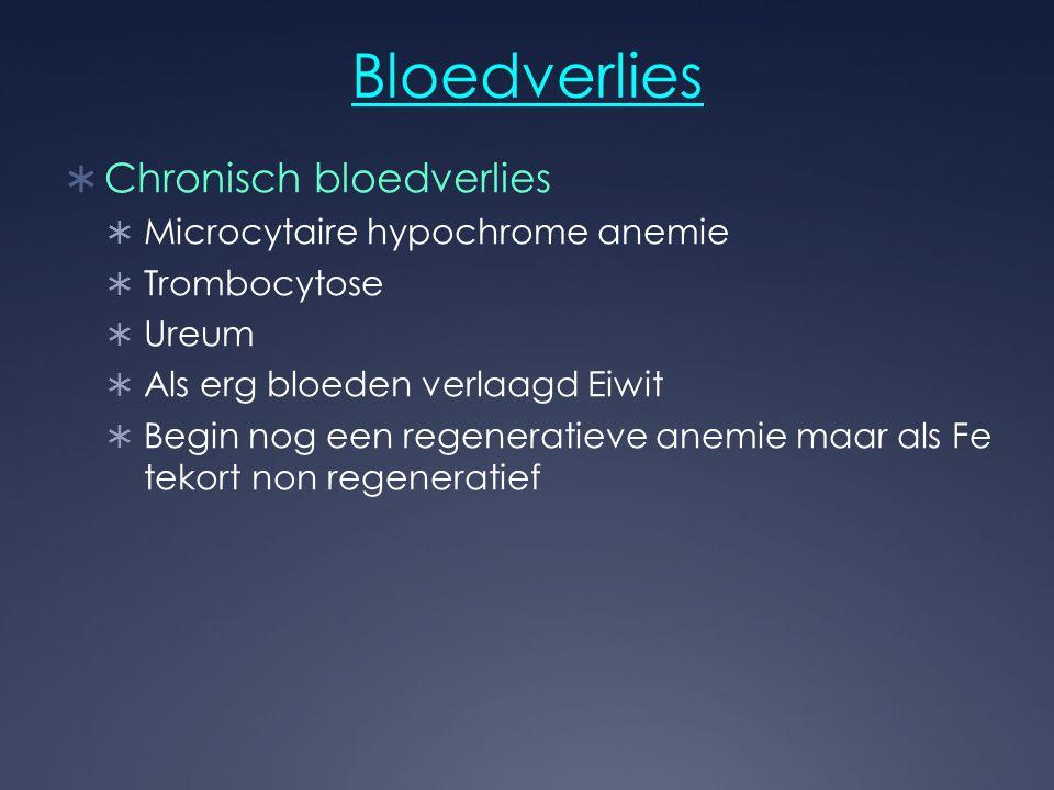 Bloedverlies  Chronisch bloedverlies  Microcytaire hypochrome anemie  Trombocytose  Ureum  Als erg bloeden verlaagd Eiwit  Begin nog een regener