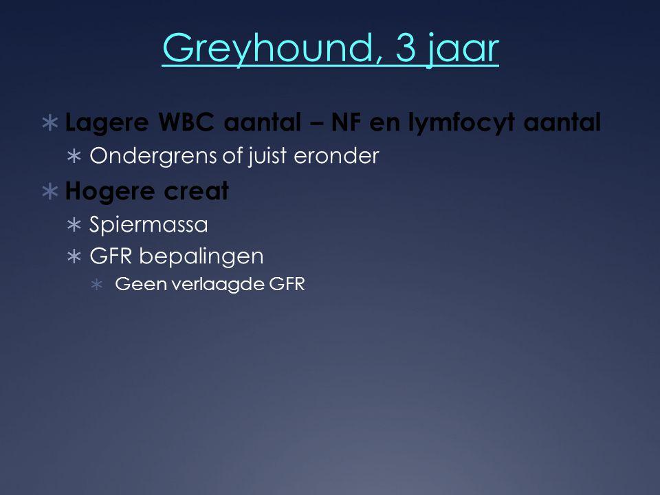 Greyhound, 3 jaar  Lagere WBC aantal – NF en lymfocyt aantal  Ondergrens of juist eronder  Hogere creat  Spiermassa  GFR bepalingen  Geen verlaa