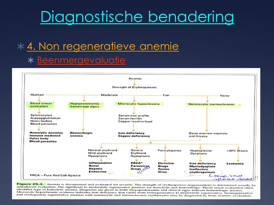 Diagnostische benadering  4. Non regeneratieve anemie  Beenmergevaluatie