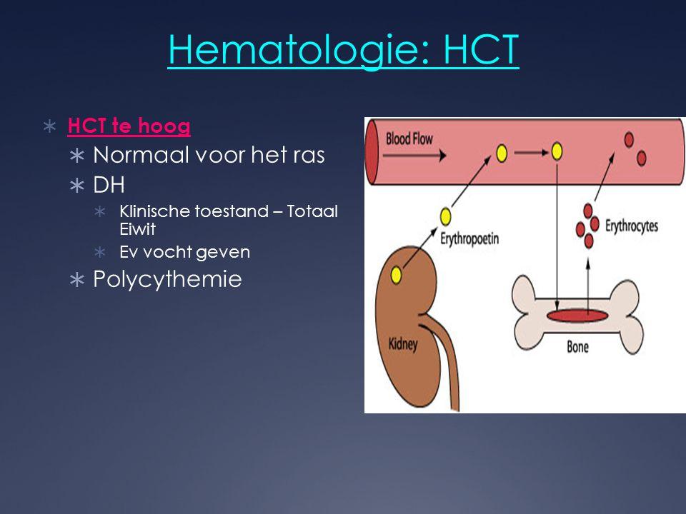 Hematologie: HCT  HCT te hoog  Normaal voor het ras  DH  Klinische toestand – Totaal Eiwit  Ev vocht geven  Polycythemie