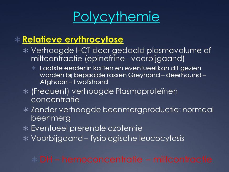 Polycythemie  Relatieve erythrocytose  Verhoogde HCT door gedaald plasmavolume of miltcontractie (epinefrine - voorbijgaand)  Laatste eerder in kat