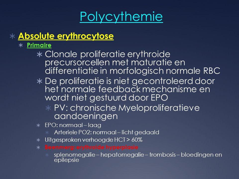 Polycythemie  Absolute erythrocytose  Primaire  Clonale proliferatie erythroide precursorcellen met maturatie en differentiatie in morfologisch nor