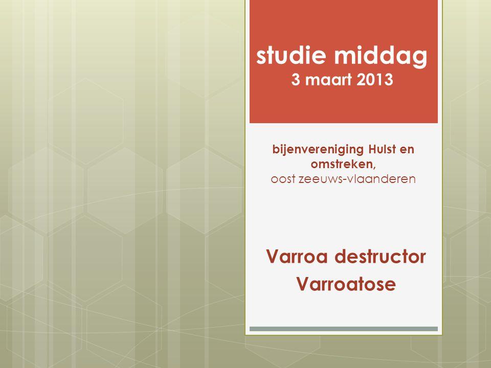 Varroa destructor Varroatose studie middag 3 maart 2013 bijenvereniging Hulst en omstreken, oost zeeuws-vlaanderen