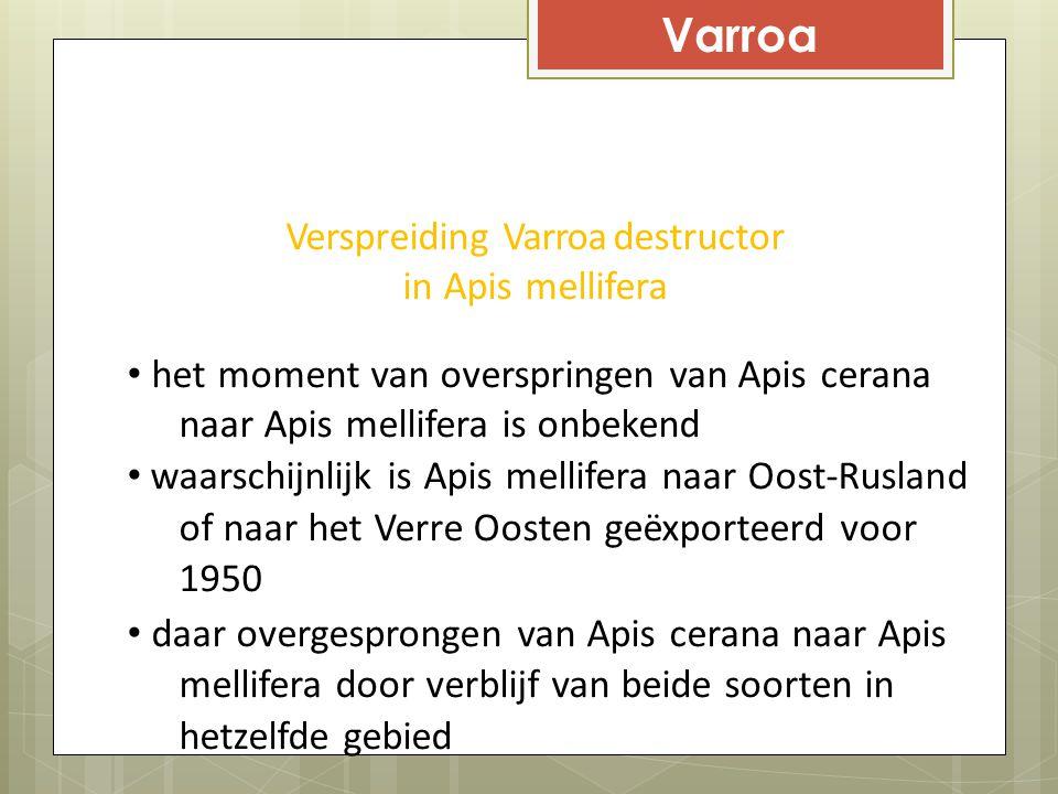 Varroa Verspreiding Varroa destructor in Apis mellifera het moment van overspringen van Apis cerana naar Apis mellifera is onbekend waarschijnlijk is