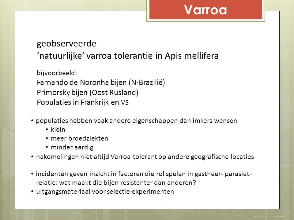 Varroa geobserveerde 'natuurlijke' varroa tolerantie in Apis mellifera bijvoorbeeld: Farnando de Noronha bijen (N-Brazilië) Primorsky bijen (Oost Rusl