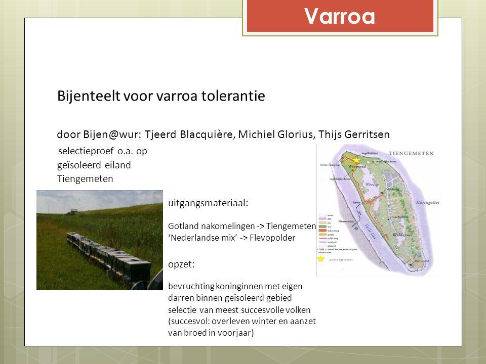 Varroa Bijenteelt voor varroa tolerantie selectieproef o.a. op geïsoleerd eiland Tiengemeten door Bijen@wur: Tjeerd Blacquière, Michiel Glorius, Thijs