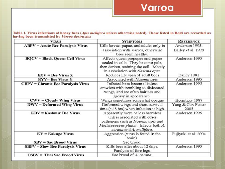 Varroa