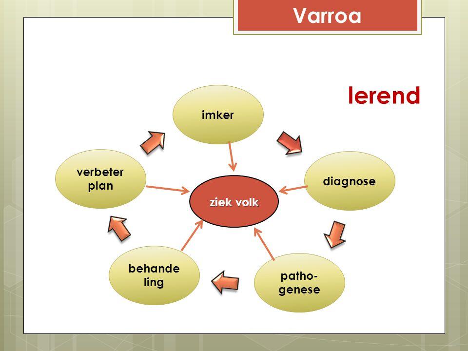 Varroa 2Voortplantingsfase larven en larvenvoedsel ruiken lekker dit komt door de broedferomonen, die aanzetten tot sluiten cel het precieze 'parfum' is nog niet bekend een kleinere afstand tussen larf en celwand vergroot het instappen van mijten een kleinere afstand tussen larf en bovenkant vergroot het instappen van mijten mijt 8-10 x vaker in darrenbroed dan in werksterbroed darren produceren meer broedferomonen meer kans om in te stappen darren worden vaker verzorgd periode 5de instar darren langer (40-50u; w.b.