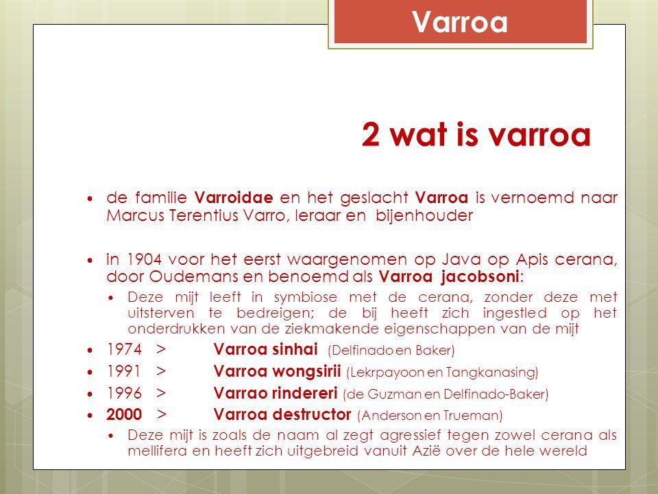 2 wat is varroa de familie Varroidae en het geslacht Varroa is vernoemd naar Marcus Terentius Varro, leraar en bijenhouder in 1904 voor het eerst waar