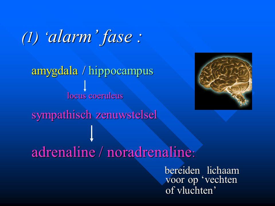 (1) ' alarm' fase : amygdala / hippocampus locus coeruleus locus coeruleus sympathisch zenuwstelsel adrenaline / noradrenaline : bereiden lichaam bere