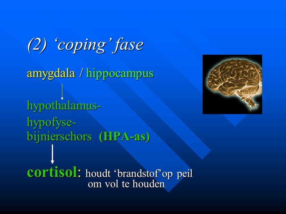 (2) 'coping' fase amygdala / hippocampus hypothalamus-hypofyse- bijnierschors (HPA-as) cortisol: houdt 'brandstof'op peil om vol te houden om vol te h