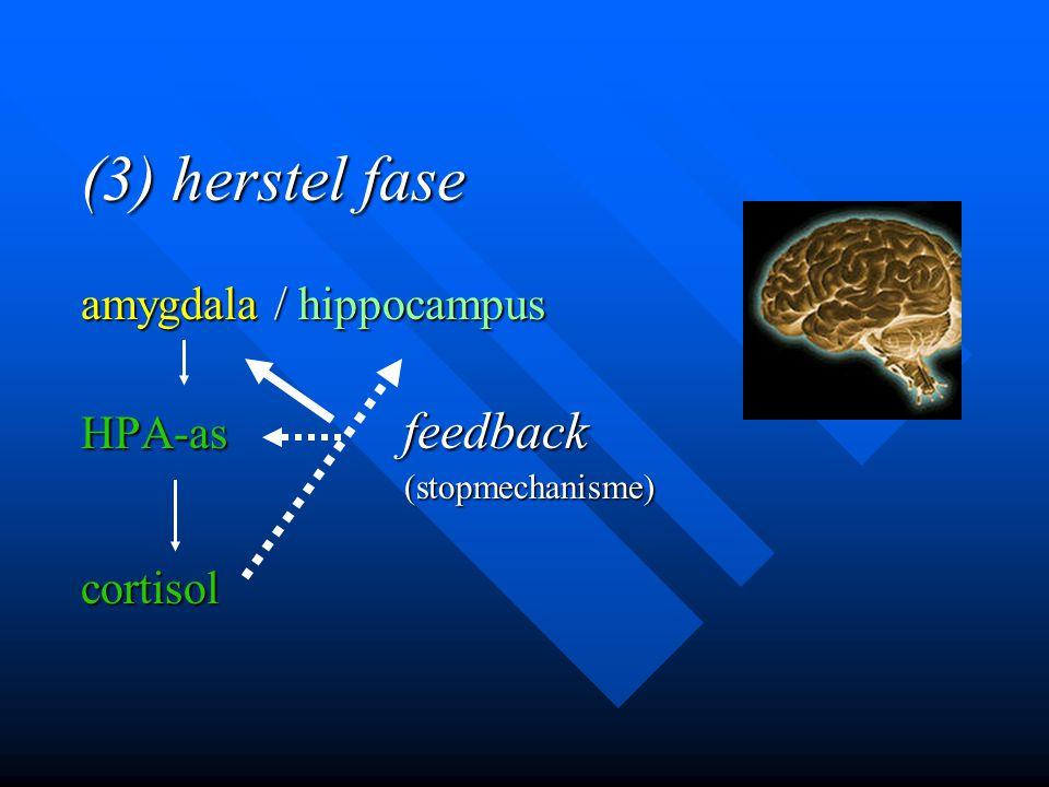 (3) herstel fase amygdala / hippocampus HPA-as feedback (stopmechanisme) (stopmechanisme)cortisol