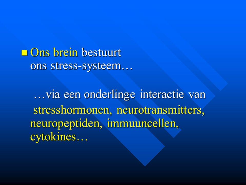 Ons brein bestuurt ons stress-systeem… Ons brein bestuurt ons stress-systeem… …via een onderlinge interactie van …via een onderlinge interactie van st