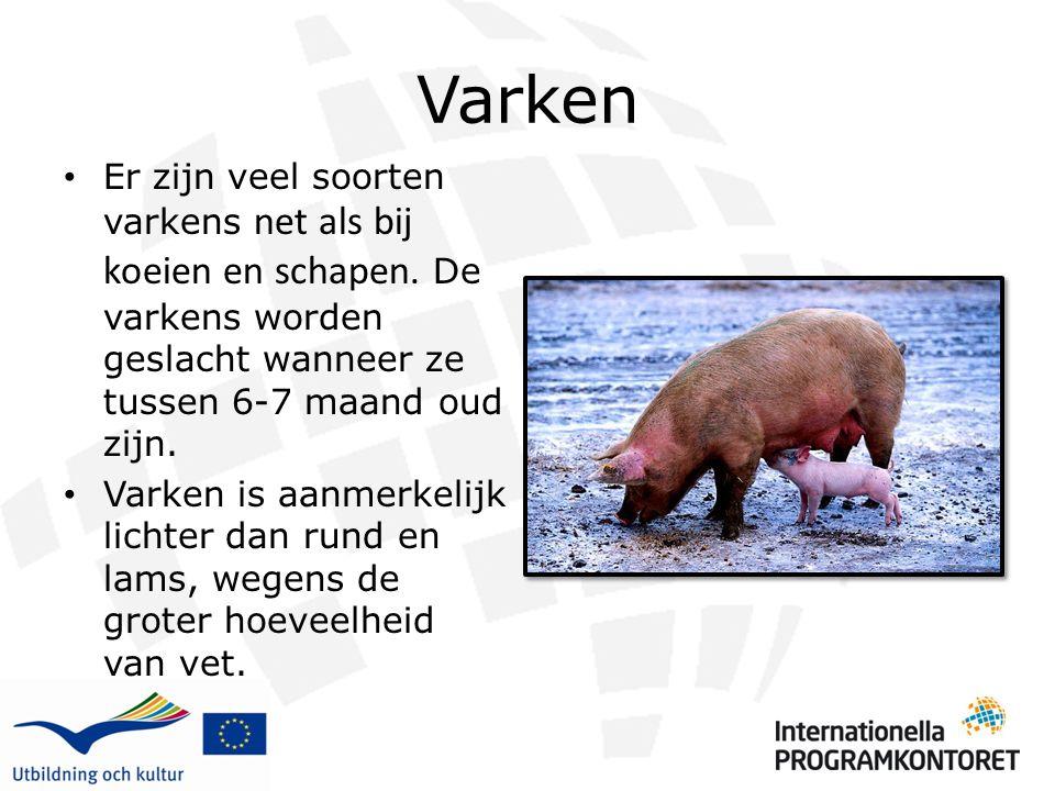 Varken Er zijn veel soorten varkens net als bij koeien en schapen. De varkens worden geslacht wanneer ze tussen 6-7 maand oud zijn. Varken is aanmerke