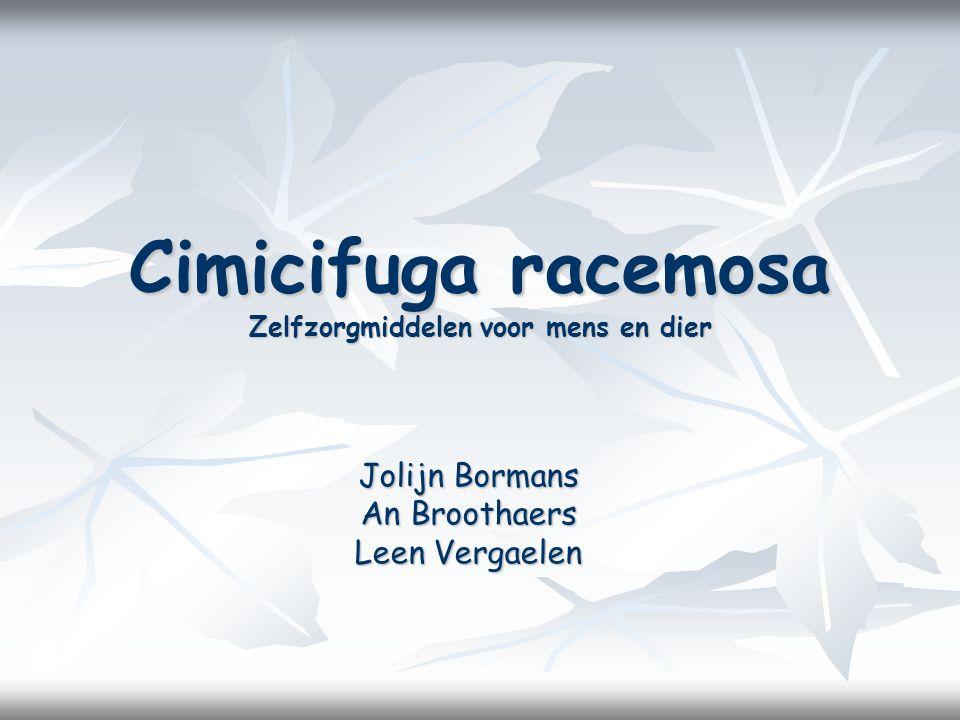Cimicifuga racemosa Zelfzorgmiddelen voor mens en dier Jolijn Bormans An Broothaers Leen Vergaelen