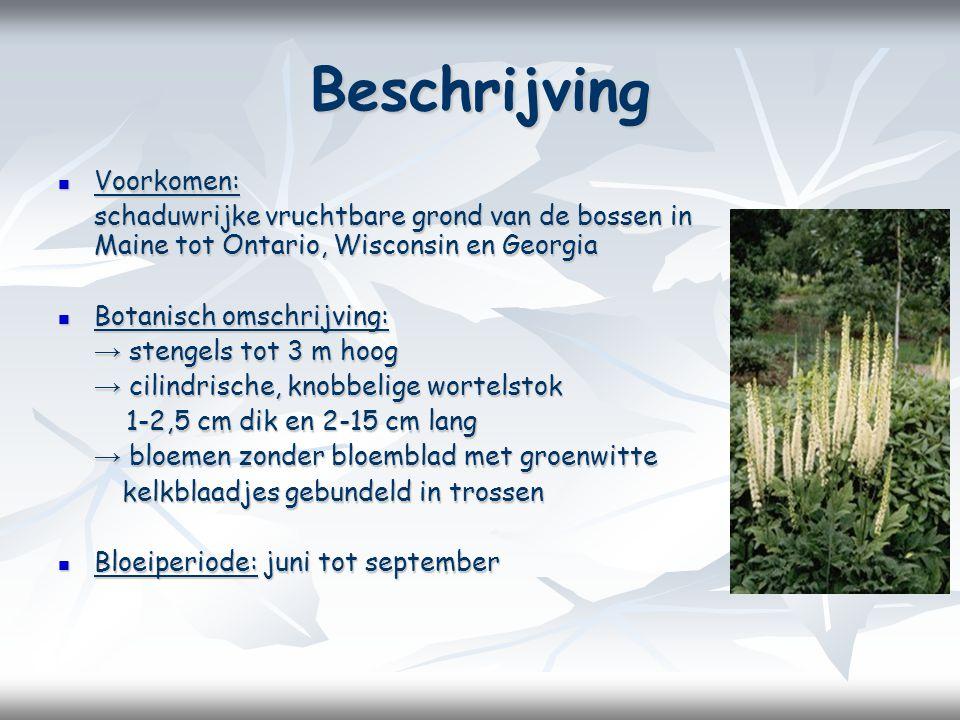 Beschrijving Voorkomen: Voorkomen: schaduwrijke vruchtbare grond van de bossen in Maine tot Ontario, Wisconsin en Georgia Botanisch omschrijving: Botanisch omschrijving: → stengels tot 3 m hoog → cilindrische, knobbelige wortelstok 1-2,5 cm dik en 2-15 cm lang 1-2,5 cm dik en 2-15 cm lang → bloemen zonder bloemblad met groenwitte kelkblaadjes gebundeld in trossen kelkblaadjes gebundeld in trossen Bloeiperiode: juni tot september Bloeiperiode: juni tot september
