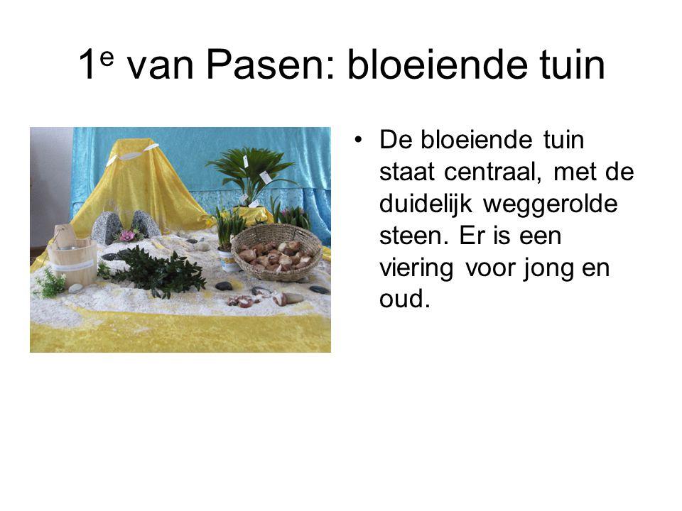 1 e van Pasen: bloeiende tuin De bloeiende tuin staat centraal, met de duidelijk weggerolde steen. Er is een viering voor jong en oud.
