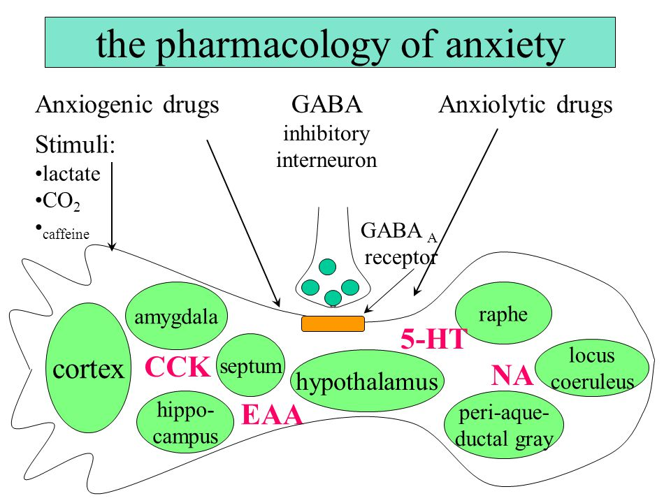 the pharmacology of anxiety Anxiogenic drugsAnxiolytic drugs GABA inhibitory interneuron amygdala cortex hippo- campus septum hypothalamus raphe peri-aque- ductal gray locus coeruleus CCK EAA 5-HT NA GABA A receptor Stimuli: lactate CO 2 caffeine