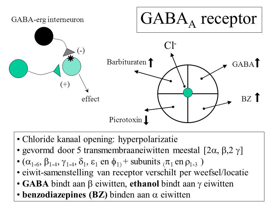GABA A receptor Chloride kanaal opening: hyperpolarizatie gevormd door 5 transmembraaneiwitten meestal [2 , ,2  ] (  1-6,  1-4,  1-4,  1,  1 en  1) + subunits (  1 en  1-3 ) eiwit-samenstelling van receptor verschilt per weefsel/locatie GABA bindt aan  eiwitten, ethanol bindt aan  eiwitten benzodiazepines (BZ) binden aan  eiwitten (-) (+) effect GABA Barbituraten BZ Cl - GABA-erg interneuron Picrotoxin