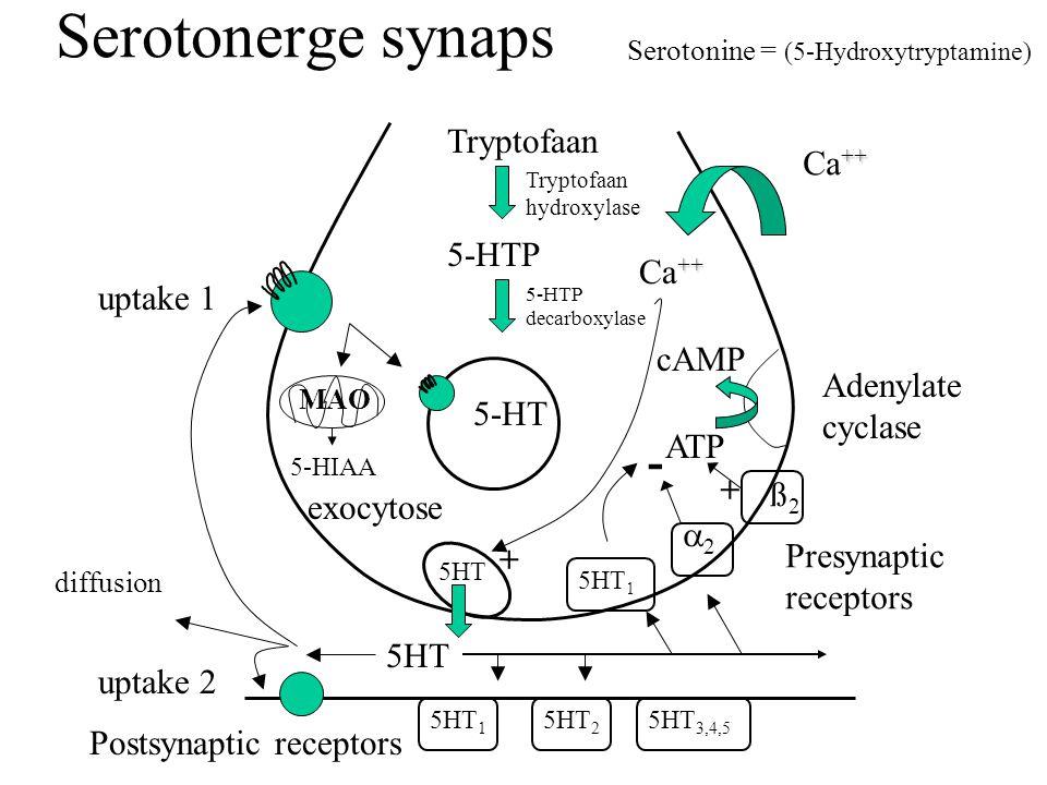 Serotonerge synaps Tryptofaan 5-HTP 5-HT exocytose ATP cAMP Adenylate cyclase uptake 1 uptake 2 5HT ++ Ca ++ 5HT 2 5HT 1 MAO - + Postsynaptic receptors Presynaptic receptors ++ Ca ++ + diffusion Tryptofaan hydroxylase 5HT 3,4,5 5-HIAA 5-HTP decarboxylase Serotonine = (5-Hydroxytryptamine) 5HT ß2ß2 22