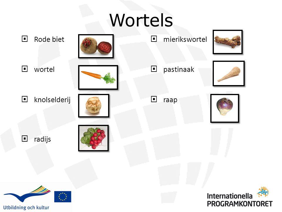 Wortels  Rode biet  wortel  knolselderij  radijs  mierikswortel  pastinaak  raap