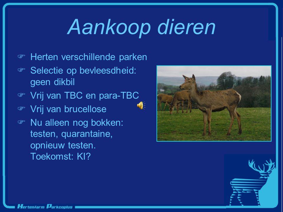 Aankoop dieren  Herten verschillende parken  Selectie op bevleesdheid: geen dikbil  Vrij van TBC en para-TBC rij van brucellose  Nu alleen nog bok