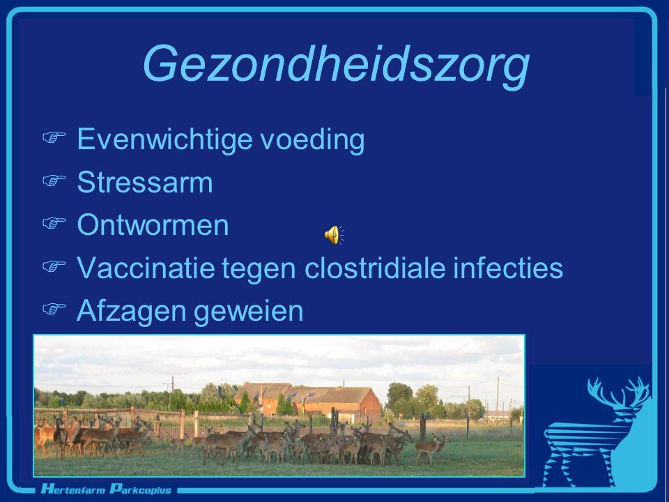 Gezondheidszorg  Evenwichtige voeding  Stressarm  Ontwormen  Vaccinatie tegen clostridiale infecties  Afzagen geweien