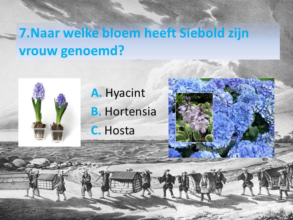 7.Naar welke bloem heeft Siebold zijn vrouw genoemd? A. Hyacint B. Hortensia C. Hosta
