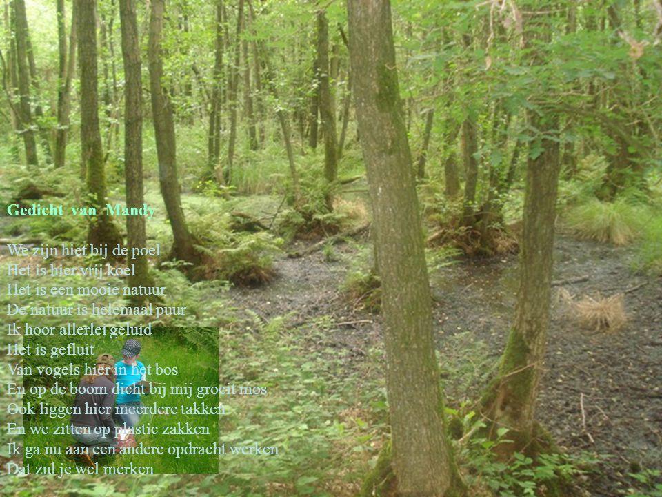 Gedicht van Mandy We zijn hiet bij de poel Het is hier vrij koel Het is een mooie natuur De natuur is helemaal puur Ik hoor allerlei geluid Het is gef
