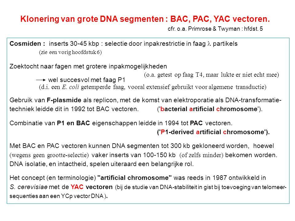 YAC-vectoren : 'yeast' artificieel chromosoom (gist) (1982-1987) Vroege YACs : Szostak & medewerkers bestudeerden telomeer DNA van eukayoten in 1982 toonden ze voor het eerst aan dat in gist een extra DNA molecule lineair behouden kon blijven mits toevoeging van telomeer sequenties in een YRp vector.