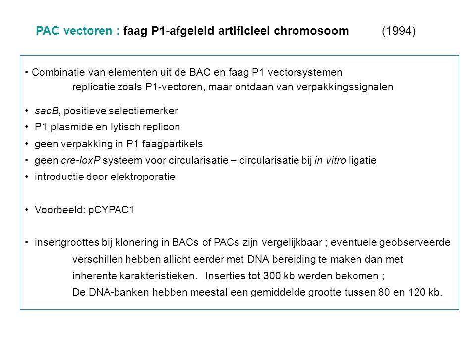 PAC vectoren : faag P1-afgeleid artificieel chromosoom (1994) Combinatie van elementen uit de BAC en faag P1 vectorsystemen replicatie zoals P1-vector