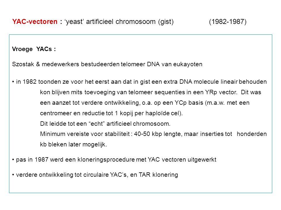 YAC-vectoren : 'yeast' artificieel chromosoom (gist) (1982-1987) Vroege YACs : Szostak & medewerkers bestudeerden telomeer DNA van eukayoten in 1982 t