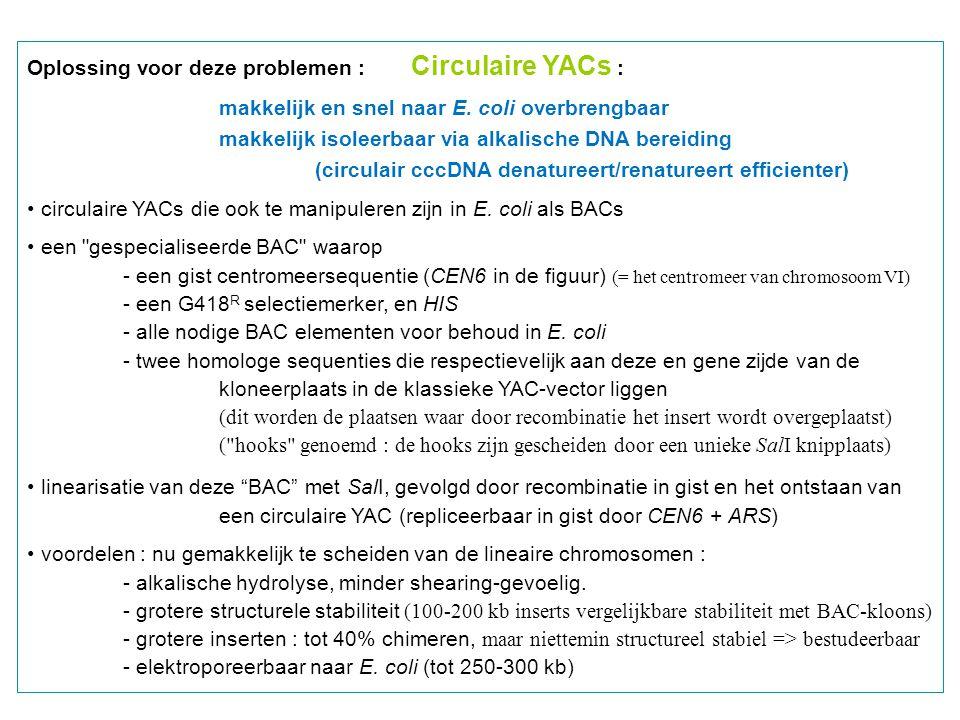 Oplossing voor deze problemen : Circulaire YACs : makkelijk en snel naar E. coli overbrengbaar makkelijk isoleerbaar via alkalische DNA bereiding (cir