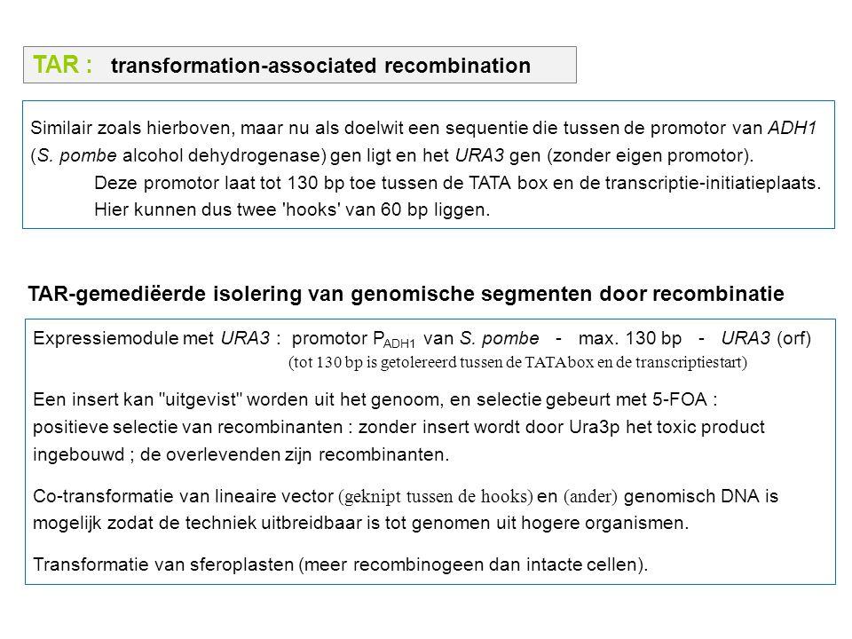 TAR : transformation-associated recombination Similair zoals hierboven, maar nu als doelwit een sequentie die tussen de promotor van ADH1 (S. pombe al