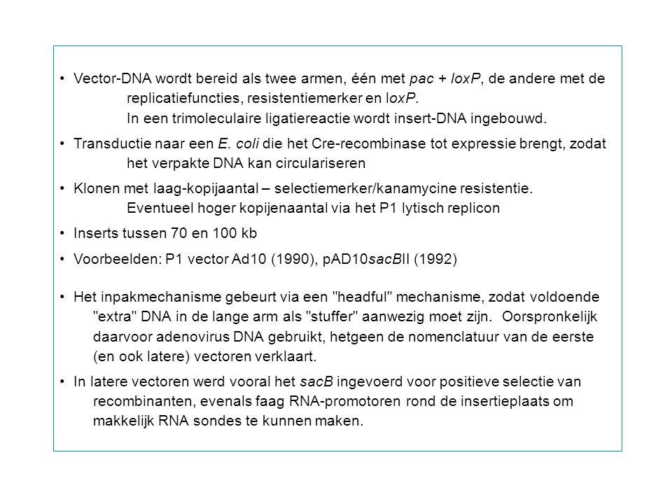 Vector-DNA wordt bereid als twee armen, één met pac + loxP, de andere met de replicatiefuncties, resistentiemerker en loxP. In een trimoleculaire liga