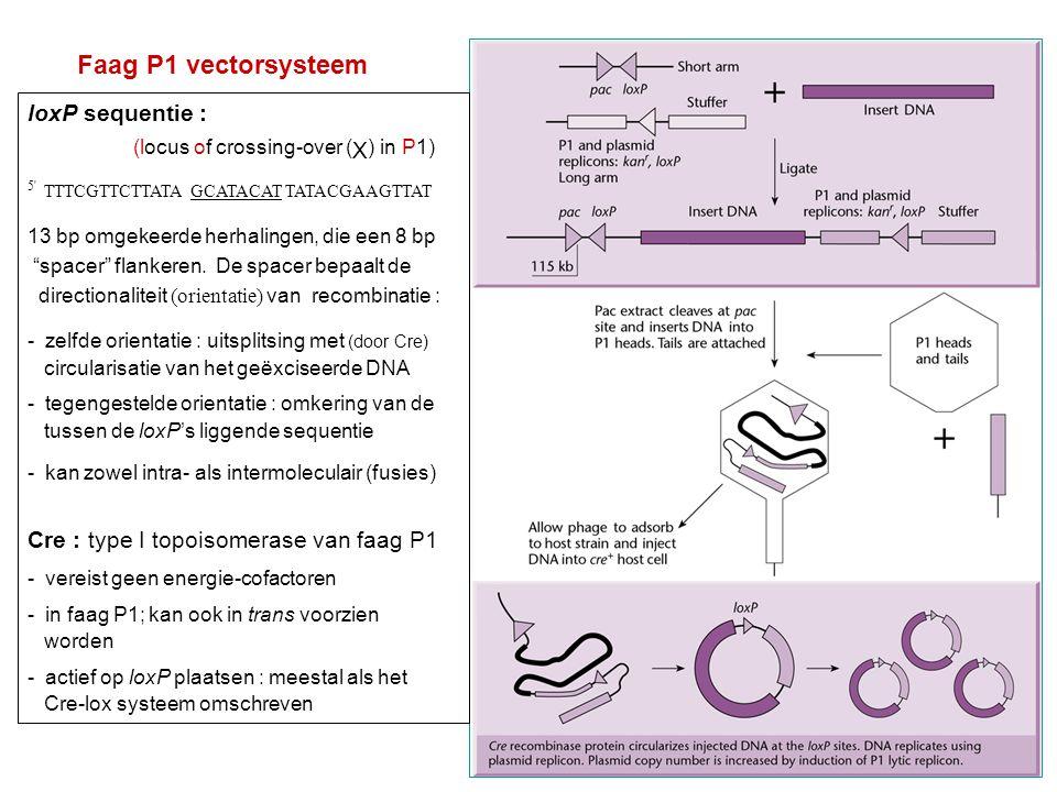 Voorzorgen : bij bewerkingen : mogelijk probleem bij manipulaties van grote DNAs : intact houden .
